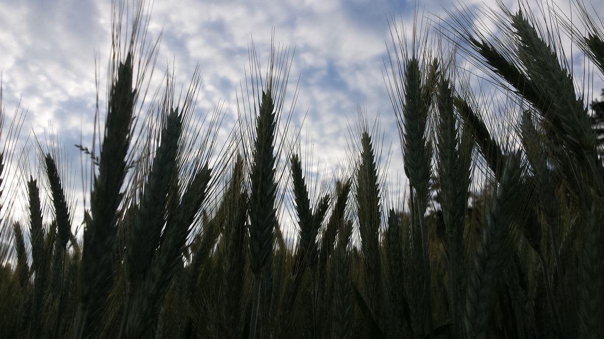 kmetija-hudobnik-09