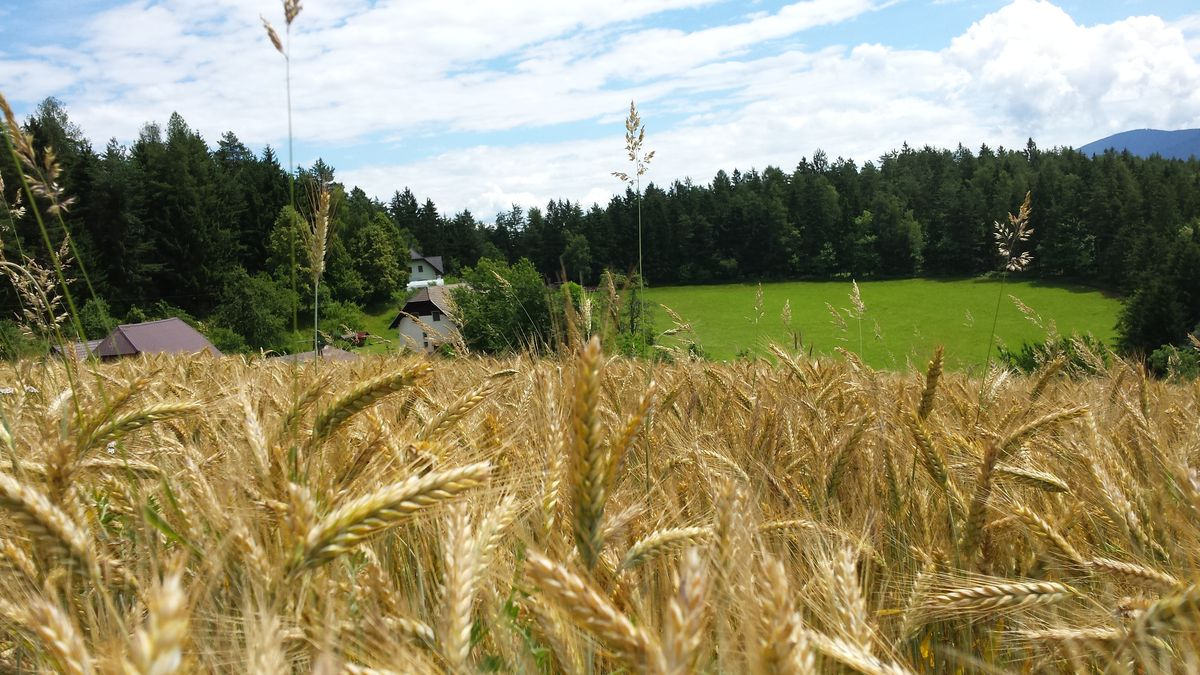 kmetija-hudobnik-13